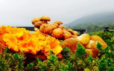 Selezione Menù dedicata ai funghi